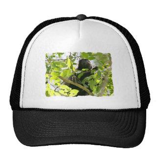 Mono de chillón en la foto de la selva gorras
