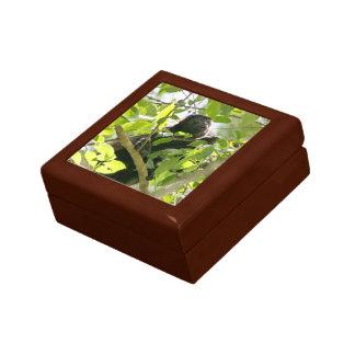 Mono de chillón en la foto de la selva joyero cuadrado pequeño