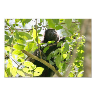 Mono de chillón en la foto de la selva