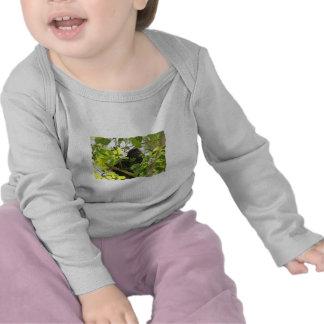 Mono de chillón que come en la selva camisetas