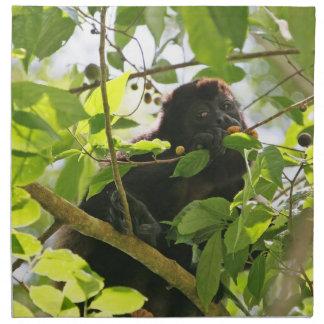 Mono de chillón que come en la selva servilletas de papel