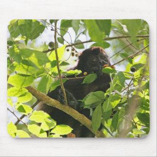 Mono de chillón que come en la selva alfombrilla de ratones