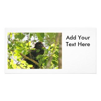 Mono de chillón que come en la selva tarjetas fotográficas personalizadas