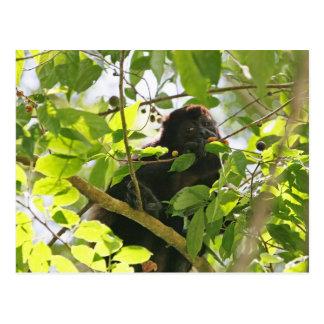 Mono de chillón que come en la selva postal