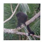 Mono de chillón y mono del bebé en la selva de Cos Azulejo Cuadrado Pequeño