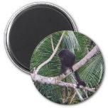 Mono de chillón y mono del bebé en la selva de Cos Imán Redondo 5 Cm