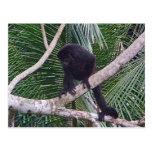Mono de chillón y mono del bebé en la selva de Cos Postal