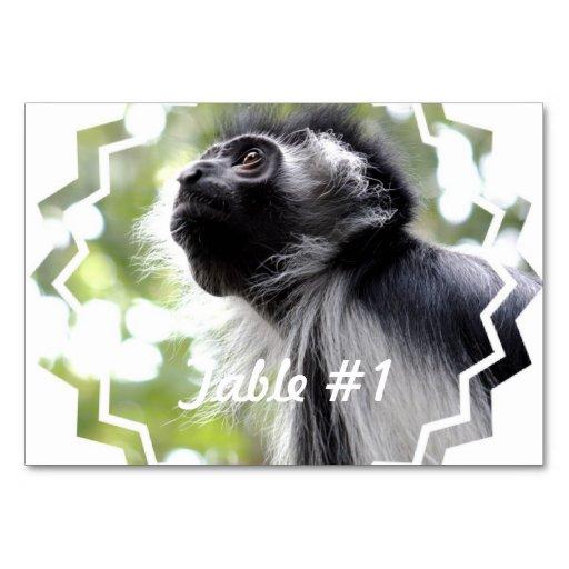 Mono de Colobus