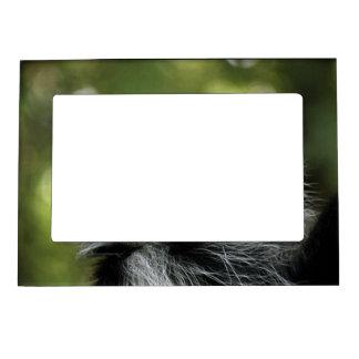 Mono de Colobus adorable Marcos Magnéticos De Fotos