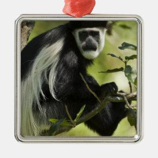 Mono de Colobus blanco y negro, Colobus 2 Adorno Navideño Cuadrado De Metal