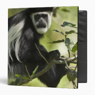 """Mono de Colobus blanco y negro, Colobus 2 Carpeta 1 1/2"""""""