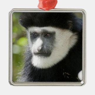 Mono de Colobus blanco y negro, Colobus Adorno Navideño Cuadrado De Metal