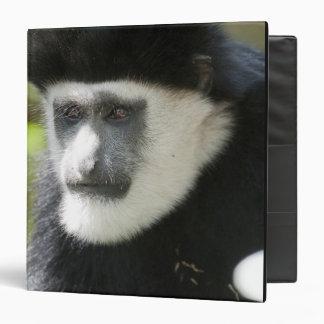 """Mono de Colobus blanco y negro, Colobus Carpeta 1 1/2"""""""
