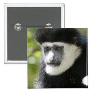 Mono de Colobus blanco y negro, Colobus Pin Cuadrado