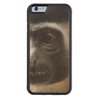 Mono de Colobus lindo Funda De iPhone 6 Bumper Arce