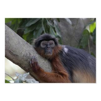 """Mono de Colobus rojo occidental Invitación 5"""" X 7"""""""