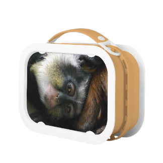 Mono de Guenon del lobo