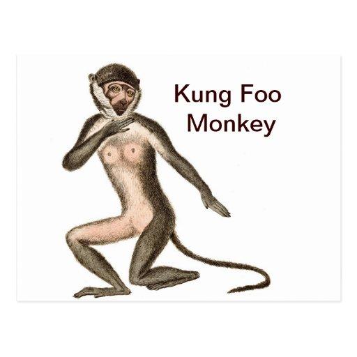 Mono de Kung Foo Postales