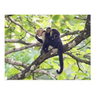 Mono de la madre y del bebé postal