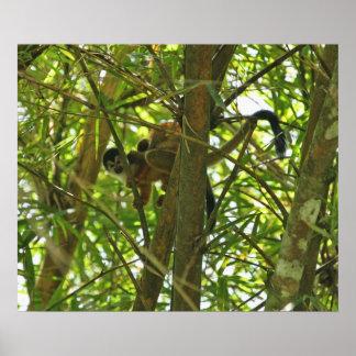 Mono de la madre y del bebé póster