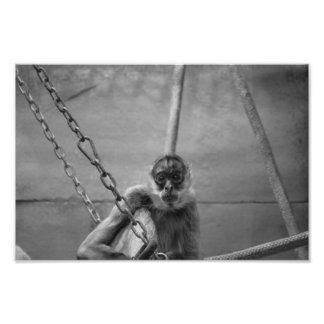 Mono de la prisión fotografía