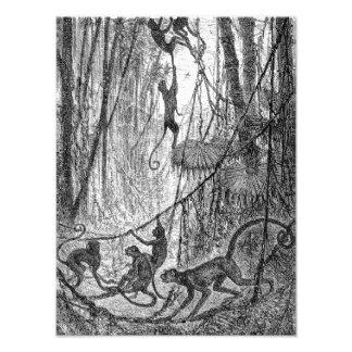 Mono de la selva de los monos de araña de los 1800 arte con fotos