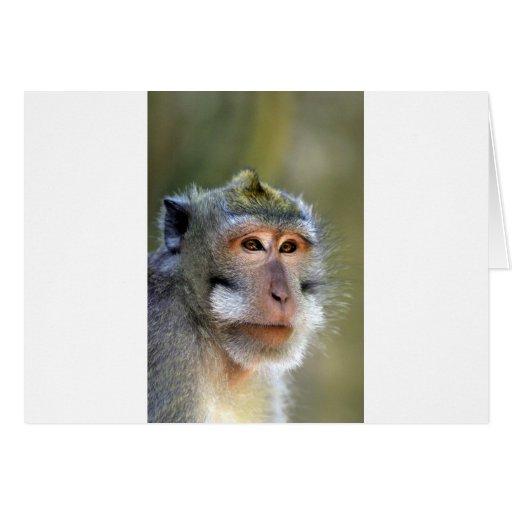 Mono de macaque del Balinese Felicitaciones