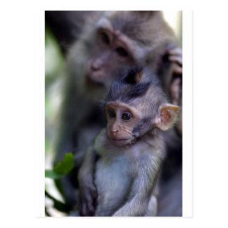 Mono de macaque lindo del bebé postal
