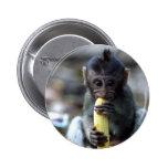 Mono de macaque lindo del bebé que come el plátano pins
