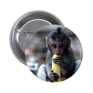 Mono de macaque lindo del bebé que come el plátano pin redondo de 2 pulgadas