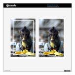 Mono de macaque lindo del bebé que come el plátano pegatina skin para kindle fire