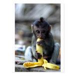 Mono de macaque lindo del bebé que come el plátano postal
