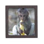 Mono de macaque lindo del bebé que goza del plátan caja de regalo de calidad
