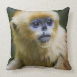 Mono de oro almohada