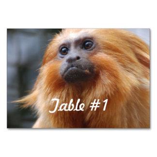 Mono de oro del Tamarin del león