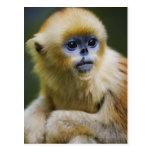 Mono de oro postal