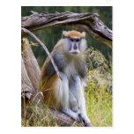 Mono de Patas Postales