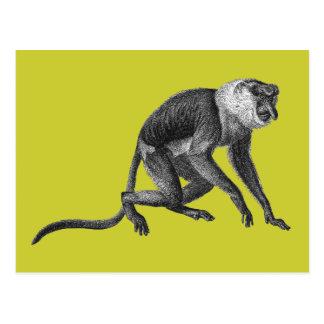 Mono de probóscide tarjetas postales