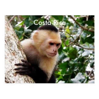 Mono de Rican de la costa Tarjetas Postales
