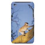 Mono de Vervet en la rama de árbol, Serengeti Case-Mate iPod Touch Protector