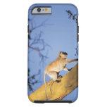 Mono de Vervet en la rama de árbol, Serengeti Funda De iPhone 6 Tough