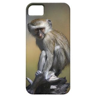 Mono de Vervet joven (aethiops del Cercopithecus)  iPhone 5 Protectores