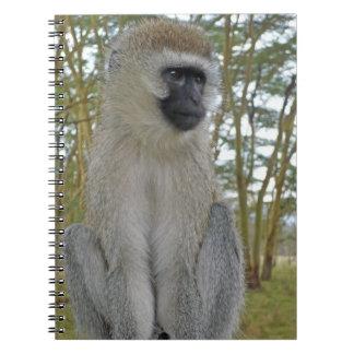 Mono de Vervet Libretas Espirales