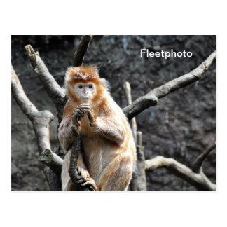Mono del asiático de la mermelada tarjeta postal