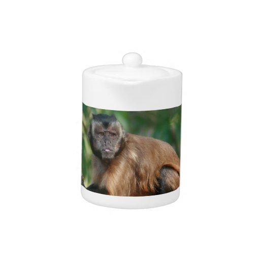 Mono del capuchón lindo pero irritable
