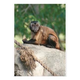Mono del capuchón lindo pero irritable comunicados personalizados