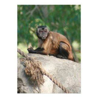 Mono del capuchón lindo pero irritable comunicados personales