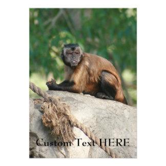 Mono del capuchón lindo pero irritable comunicado personal
