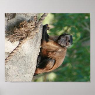 Mono del capuchón lindo pero irritable póster