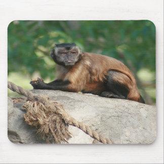 Mono del capuchón lindo pero irritable alfombrilla de ratones